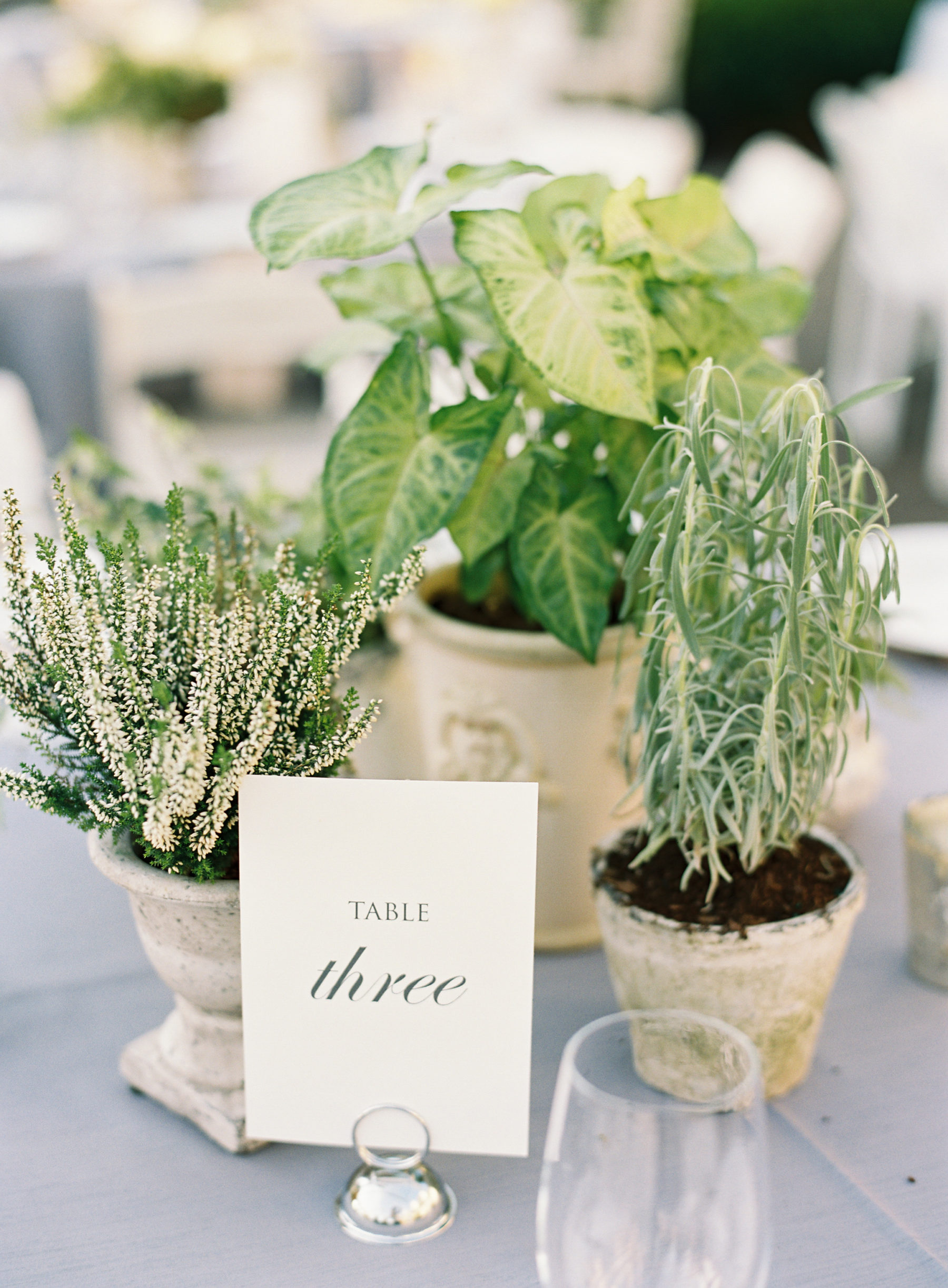 Potted plants wedding centerpieces