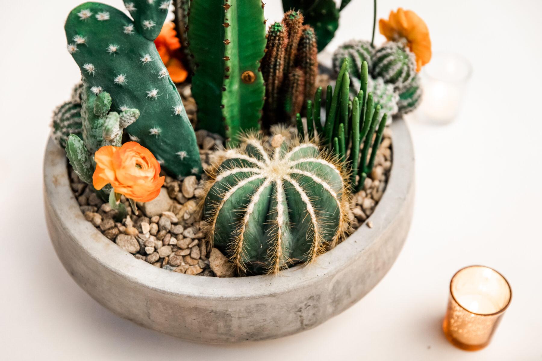 Cactus wedding centerpieces: Desert Wedding Ideas featured on Nashville Bride Guide