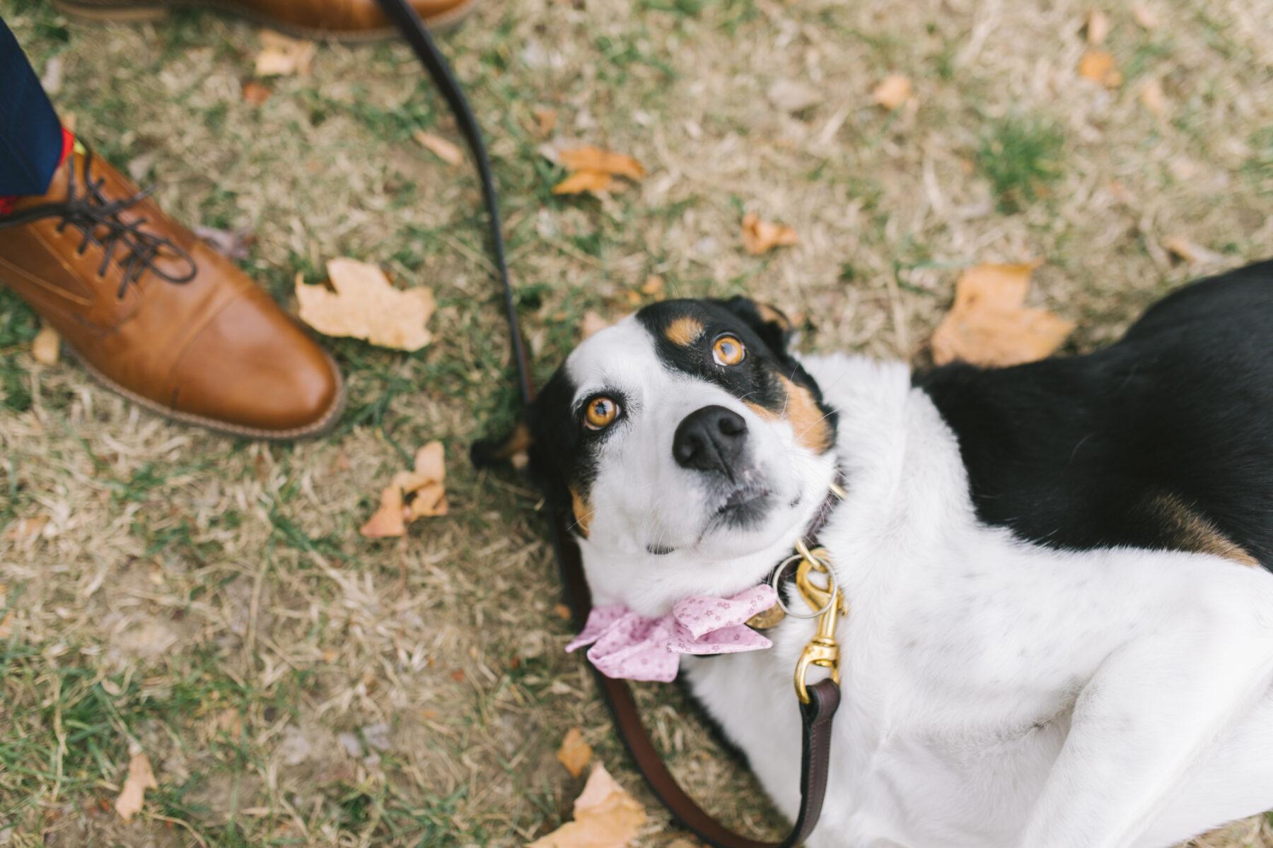 Dog laying down at wedding | Nashville Bride Guide