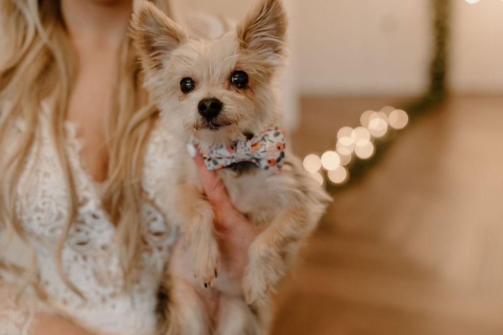 Pet wedding collar | Nashville Bride Guide